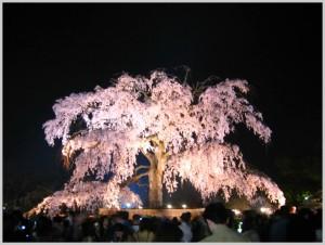BeFunky_京都夜桜(円山).jpg